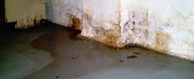 basement moisture