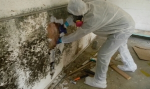 Mold Issues | Monroeville, PA